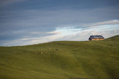 Mountain hut on a edge with cows in the meadows, sunrise, Giau P Royalty Free Stock Photo