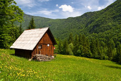 Mountain hut in summer. Mountain hut with yellow flower and green grasses royalty free stock photos
