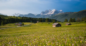 Mountain huts Meadows with yellow flowers in the Dolomites at sunset. Green grass meadows with yellow flowers and some mountain huts at sunrise with Pale of San Stock Image