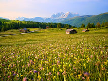 Mountain huts Meadows with yellow flowers in the Dolomites at sunset. Green grass meadows with yellow flowers and some mountain huts at sunrise with Pale of San Royalty Free Stock Images