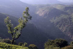 Mountain image tea estates Royalty Free Stock Photography