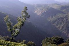 Mountain image tea estates. Indian Nilgiri mountain view from tea estates Royalty Free Stock Photography