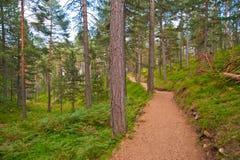 Mountain Jogging Track In Summer Stock Photos
