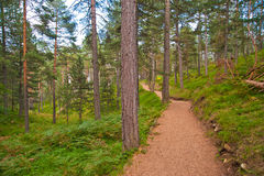 Mountain jogging track in summer Stock Photos