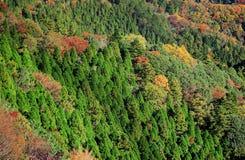 Mountain jungle in Autumn Royalty Free Stock Photo