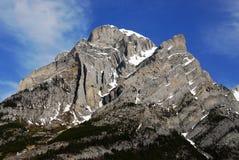 Mountain kidd Stock Photo