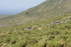 Mountain La Curota Royalty Free Stock Photo