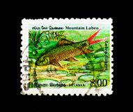 Mountain Labeo Labeo fisheri, Endemic Fish serie, circa 1990. MOSCOW, RUSSIA - DECEMBER 21, 2017: A stamp printed in Sri Lanka shows Mountain Labeo Labeo fisheri stock photography