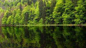 Mountain lake. Beautiful mountain reservoir Nyrsko - spring closeup - Czech Republic - Europe Stock Photography