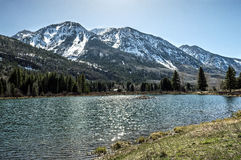 Mountain lake beaver dam in Rocky Mountain National park Royalty Free Stock Photography