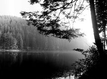 Foggy morning  on Sinevir lake Stock Photography