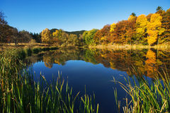 Mountain lake and colorful trees Stock Photos