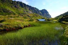 Mountain lake covered Horsetail. Norwegian mountain lake covered Horsetail Stock Photography