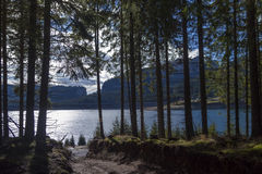 Mountain lake and fir forest Stock Image