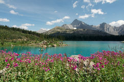Mountain Lake and Fireweed Royalty Free Stock Image