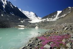 Mountain lake and flowers. Frozen lake glacier and flowers high up in the mountains Stock Image