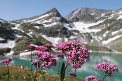 Mountain lake and flowers in apls, Austria stock images