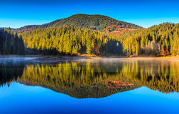 Mountain lake on foggy morning in spruce forest Stock Images