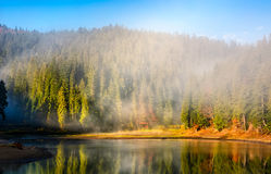 Mountain lake on foggy morning in spruce forest Royalty Free Stock Image