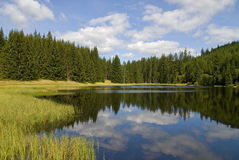 Mountain lake and forest Royalty Free Stock Photos