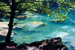 Mountain lake in forest. Beautiful transparent mountain lake with lot of fish swimming in it stock image