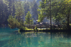 Mountain lake in forest. Beautiful transparent mountain lake with lot of fish swimming in it royalty free stock photos