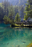 Mountain lake in forest. Beautiful transparent mountain lake with lot of fish swimming in it stock photo