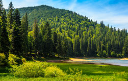Mountain lake among the forest Stock Images