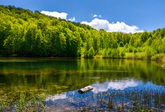 Mountain lake among the forest. Mountain lake among the green forest in picturesque springtime landscape. reflection in crystal clear water. beautiful weather Stock Images
