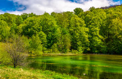 Mountain lake among the forest Stock Photography