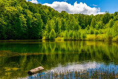 Mountain lake among the forest Royalty Free Stock Photography