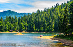 Mountain lake among the forest in National Park Synevir, Ukraine Royalty Free Stock Photo