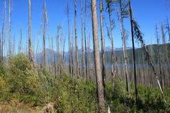 Mountain and Lake 3 Stock Image