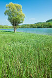 Mountain lake with green meadow Royalty Free Stock Images
