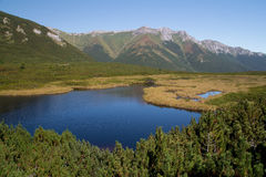 Mountain lake in high tatras summer landscape Royalty Free Stock Photography