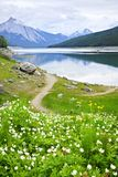 Mountain lake in Jasper National Park, Canada. Wildflowers on the shore of Medicine Lake in Jasper National Park,  Canada Stock Photography