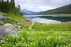 Mountain lake in Jasper National Park, Canada. Wildflowers on the shore of Medicine Lake in Jasper National Park,  Canada Stock Photos