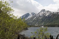 Lower Multinskoye lake, Altai Republic. Mountain lake, lake in the mountains, green water, pure mountain lake, snow-capped mountains Royalty Free Stock Photography