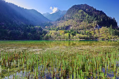 Mountain lake morning in Jiuzhaigou Valley Royalty Free Stock Photography