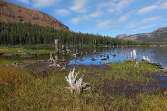 A mountain lake, overgrown with grass Stock Photography