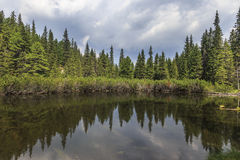 Mountain lake in pine forest Royalty Free Stock Images