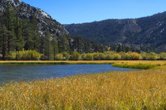 Mountain Lake with Reeds. Mountain lake in fall surrounded by reeds Royalty Free Stock Photos