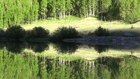 Mountain Lake Reflection. A scenic reflection in a Colorado mountain lake stock video