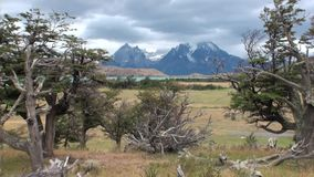 Mountain lake is seen in background through trees and forest in Patagonia. Unique landscape of wildlife. Beautiful nature background. Travel and tourism in stock video