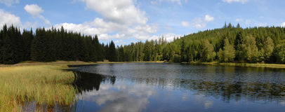 Mountain lake with spruce forest Royalty Free Stock Photos