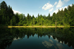 Mountain lake in spruce forest on blue sky Stock Photography