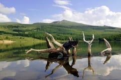 Mountain lake. A Mountain lake in summer Royalty Free Stock Images