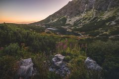 Mountain Lake at Sunset with Flowers and Rocks in Foreground Royalty Free Stock Image