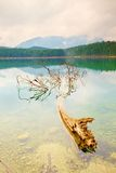 Mountain  lake before sunset.Old tree fallen into water. Stock Image