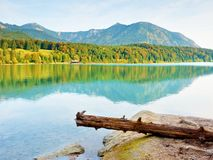 Mountain lake before sunset. Wet sand beach with tree fallen into water. Stock Photos